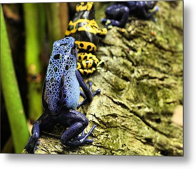 Leap Frog Metal Print by JC Findley