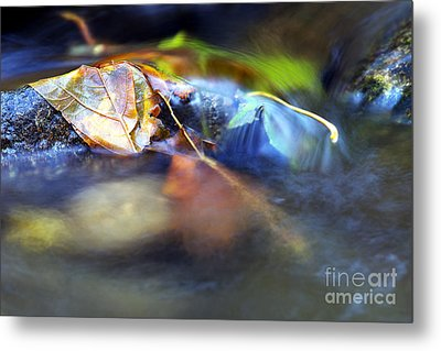 Leaves On Rock In Stream Metal Print by Sharon Talson