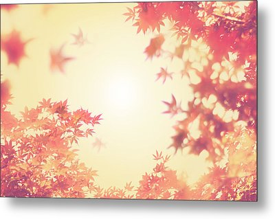 Let It Fall Metal Print by Amy Tyler