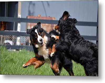 Lets Play Metal Print by Paulette Hawkins