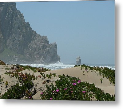 Life - Is Everywhere Metal Print by From Gods Porch Photography