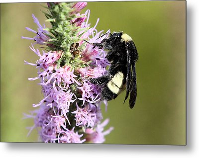 Life Of A Bee Metal Print by Laura Oakman