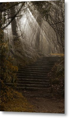 Lighting The Path Metal Print by Andrew Soundarajan