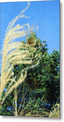 Like The Wind Metal Print by Todd Sherlock