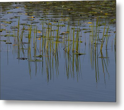 Lilly Pads Float On A River Metal Print by Stacy Gold