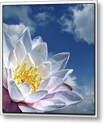 Lily Flower Against Sky Metal Print by Photo by Daveduke.