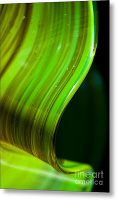 Lime Curl Metal Print by Dana Kern