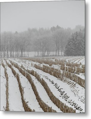 Lines In The Snow Metal Print by Odd Jeppesen