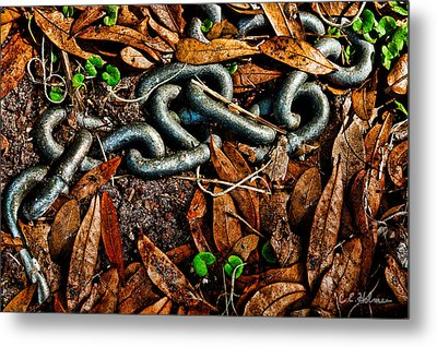 Links And Leaves Metal Print by Christopher Holmes