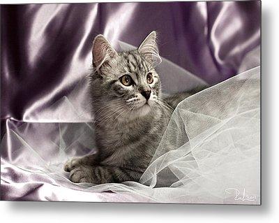 Little Cat On Lilac Metal Print by Raffaella Lunelli