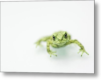Little Frog Metal Print by Erik van Hannen
