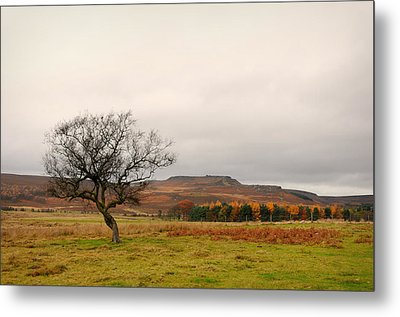Lone Tree And Higger Tor Metal Print by Siobhan Brennan-Raymond