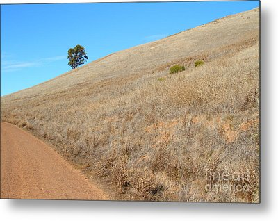 Lone Tree At End Of The Trail At Coyote Hills California . 7d10920 Metal Print by Wingsdomain Art and Photography
