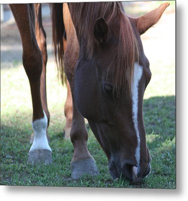Lonely Horse Metal Print by Rachel Snell