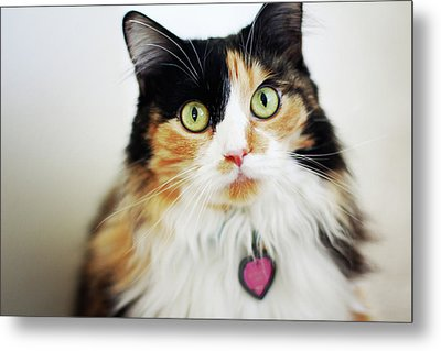 Long Haired Calico Cat Metal Print by Genevieve Morrison