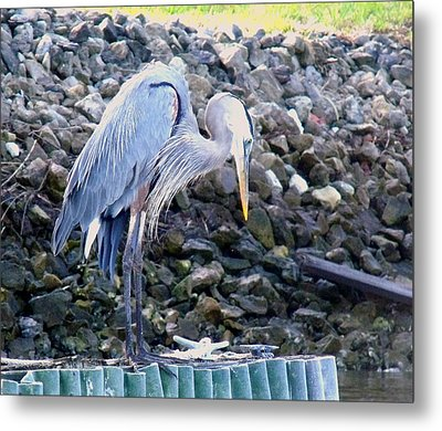 Looking For Lunch Metal Print by Marilyn Holkham