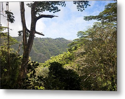Looking Through The Trees In A Tropical Metal Print by Taylor S. Kennedy