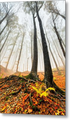 Lords Of The Forest Metal Print by Evgeni Dinev