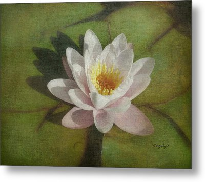 Lotus Blossom Textured Metal Print by Cindy Wright