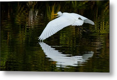 Low Flying Reflection Of Snowy Egret Metal Print by Andres Leon