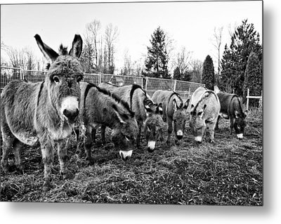 Lunch Metal Print by Monte Arnold