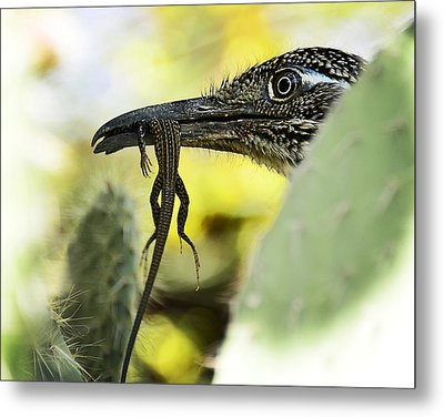 Lunch With A Roadrunner  Metal Print by Saija  Lehtonen