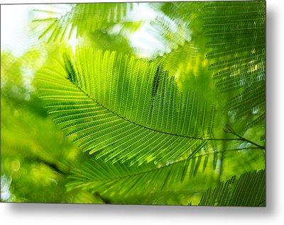 Luscious Green Light. Acacia Tree Metal Print by Jenny Rainbow