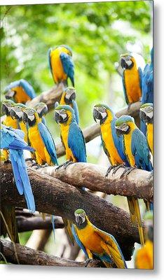 Macaw Metal Print by Anek Suwannaphoom