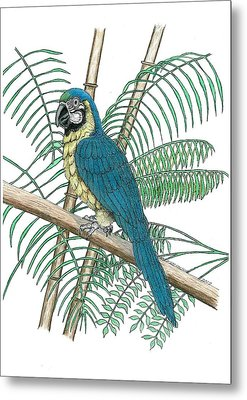 Macaw Metal Print by Richard Freshour