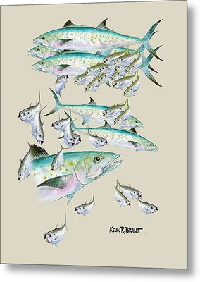 Mackerel Montage Metal Print by Kevin Brant