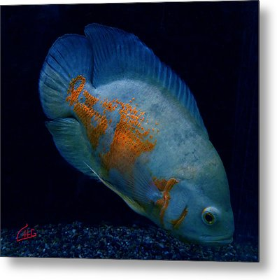 Magic Fish Name Oscar  Metal Print by Colette V Hera  Guggenheim