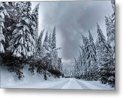 Magnificent Forest Metal Print by Evgeni Dinev