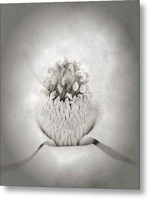Magnolia 1 Metal Print by Rich Franco