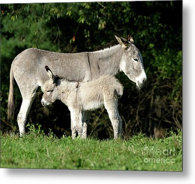 Mama Donkey And Baby Metal Print by Deborah  Smith