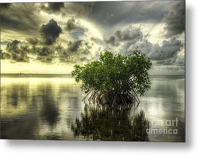 Mangroves I Metal Print by Bruce Bain