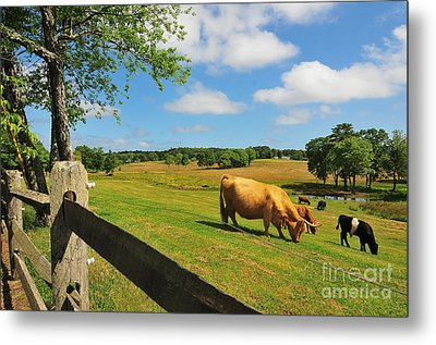 Massachusetts Farm Metal Print by Catherine Reusch  Daley