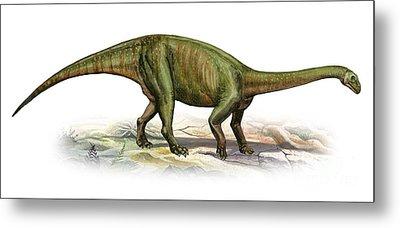 Massospondylus Carinatus, A Prehistoric Metal Print by Sergey Krasovskiy