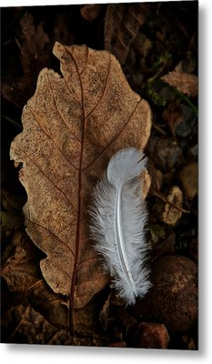 May To October Metal Print by Odd Jeppesen