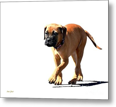 Me And My Shadow 5 Metal Print by Dale   Ford
