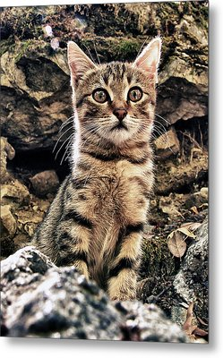 Mediterranean Wild Babe Cat Metal Print by Stelios Kleanthous