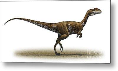 Megapnosaurus Kayentakatae Metal Print by Sergey Krasovskiy