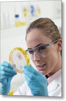 Microbiological Research Metal Print by Tek Image
