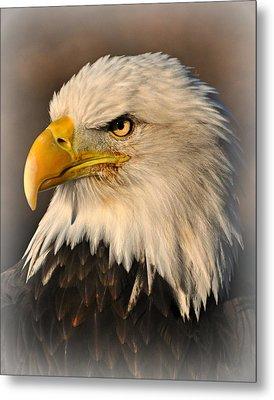 Misty Eagle Metal Print by Marty Koch