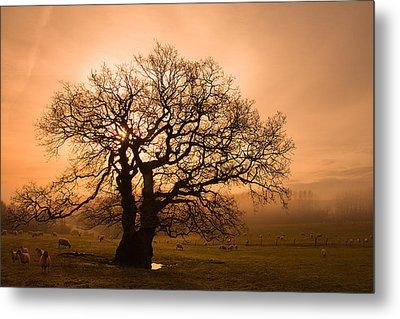 Misty Oak Metal Print by Kris Dutson