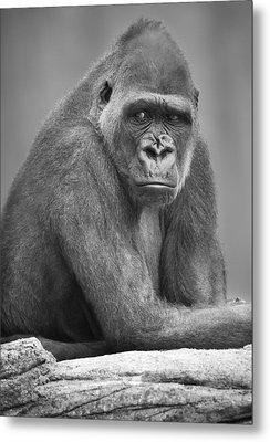 Monkey Metal Print by Darren Greenwood