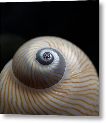 Moon Shell Metal Print by Carol Leigh
