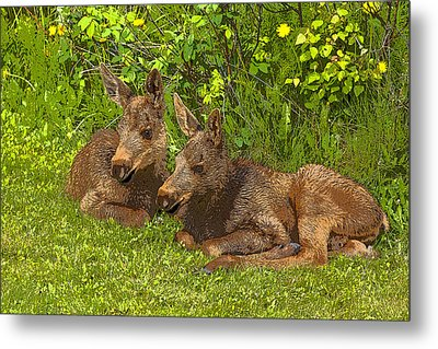Moose Twins- Abstract Metal Print by Tim Grams