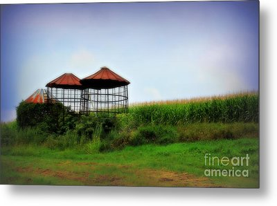 Morning Corn Metal Print by Perry Webster