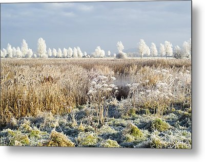 Morning Frost Metal Print by Duncan Shaw