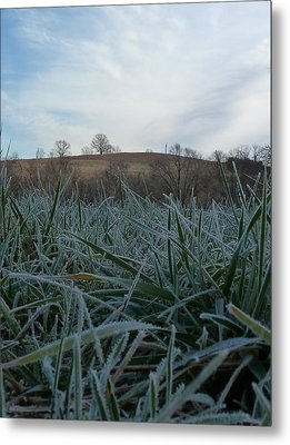 Morning Frost Metal Print by Felix Concepcion